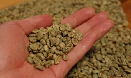オーガニックの生豆にはこれだけのカビ豆が含まれている