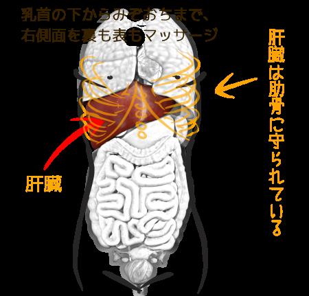 肝臓のオイルマッサージ