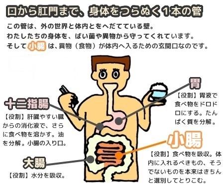消化のしくみと小腸の役割