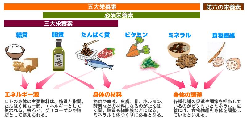 栄養素について