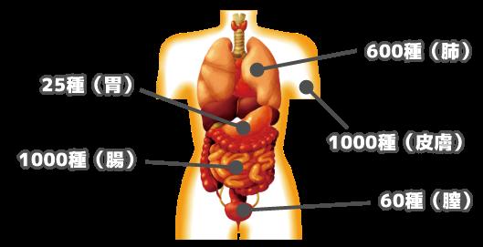 マイクロバイオーム