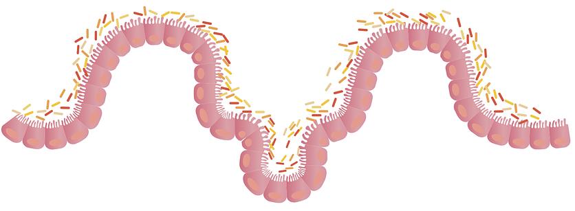 腸粘膜が癒える